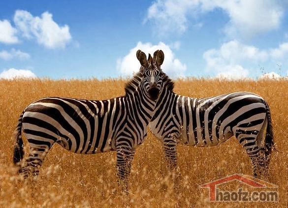 二十九张顶级动物摄影作品