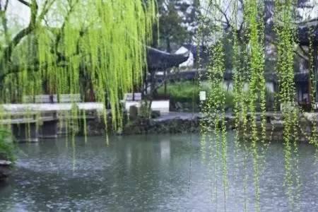 壁纸 垂柳 风景 柳树 摄影 树 桌面 450_300