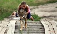 白俄罗斯一家庭养狼当宠物
